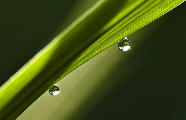 two-dew-drops-on-a-blade-of-grass-michael-whitaker