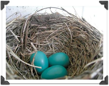 Blog Nest