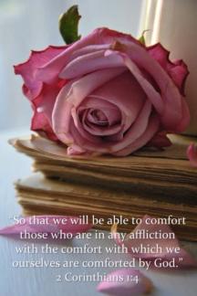 Rose:Comfort