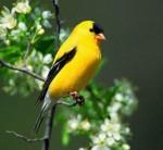 Image Found:www.songbirdgarden.com