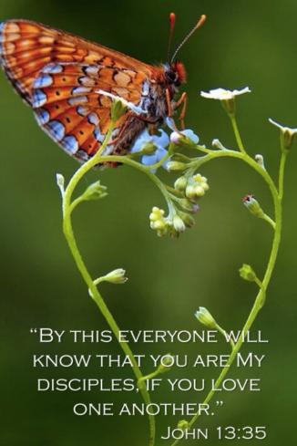 Butterfly/Heart Vine John 13:35
