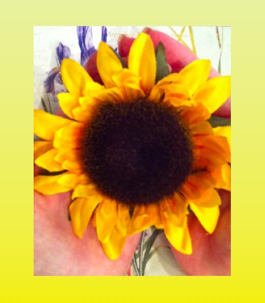 Edited Sonflower