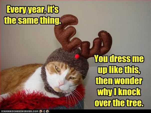 Cat Dressed Up Like Reindeer
