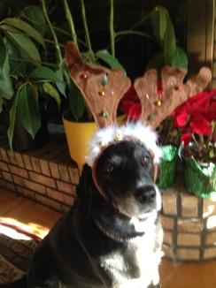 Anna Bell Donna's Dog