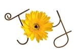 daisy-joy-word